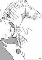 Cheval (Dessin : T Devièse, R Pigeaud)